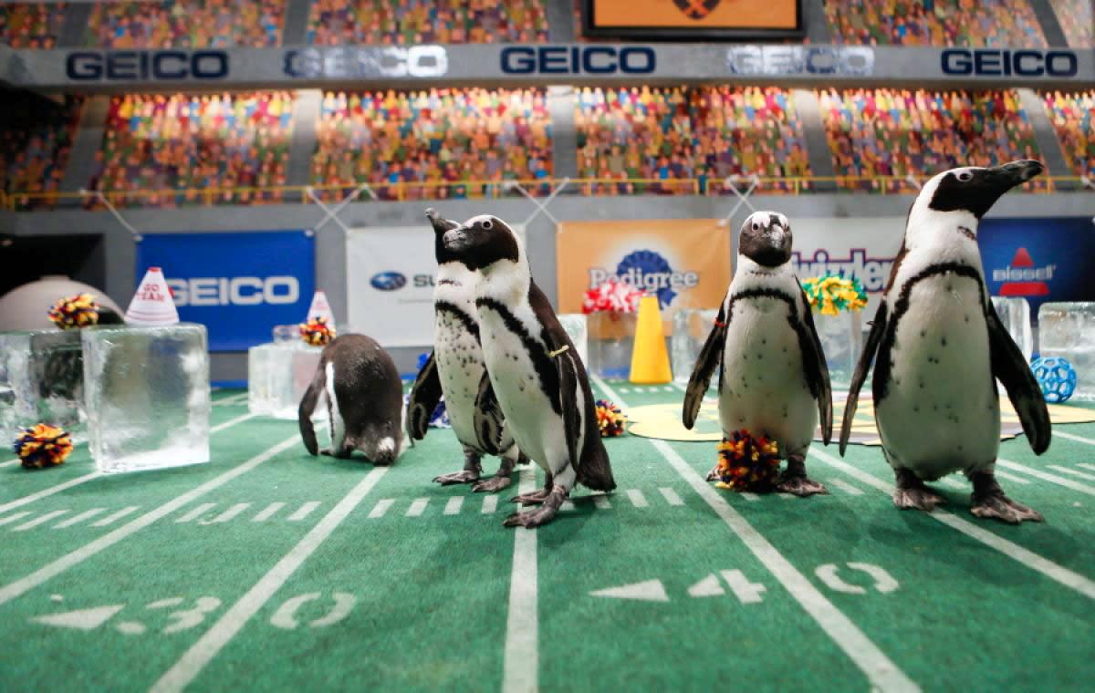Puppy-Bowl-X-penguins.jpg