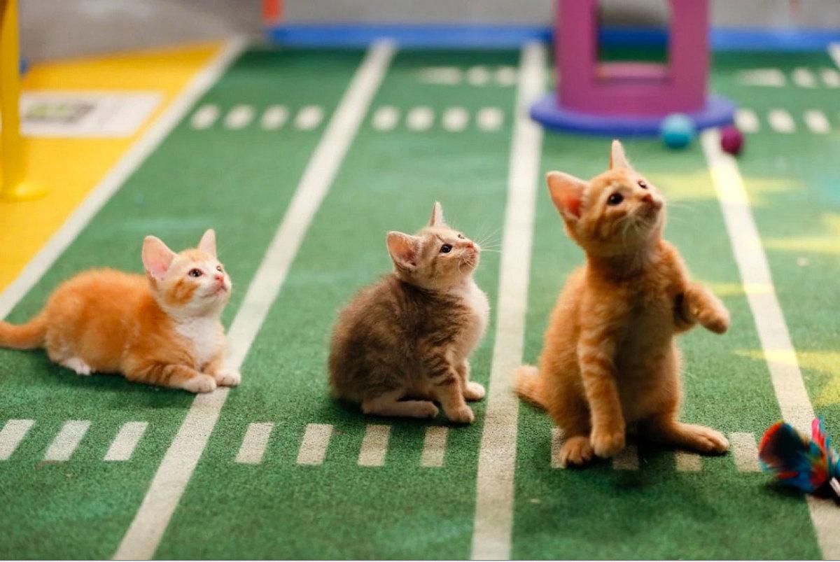Puppy-Bowl-X-halftime-kittens(2).jpg