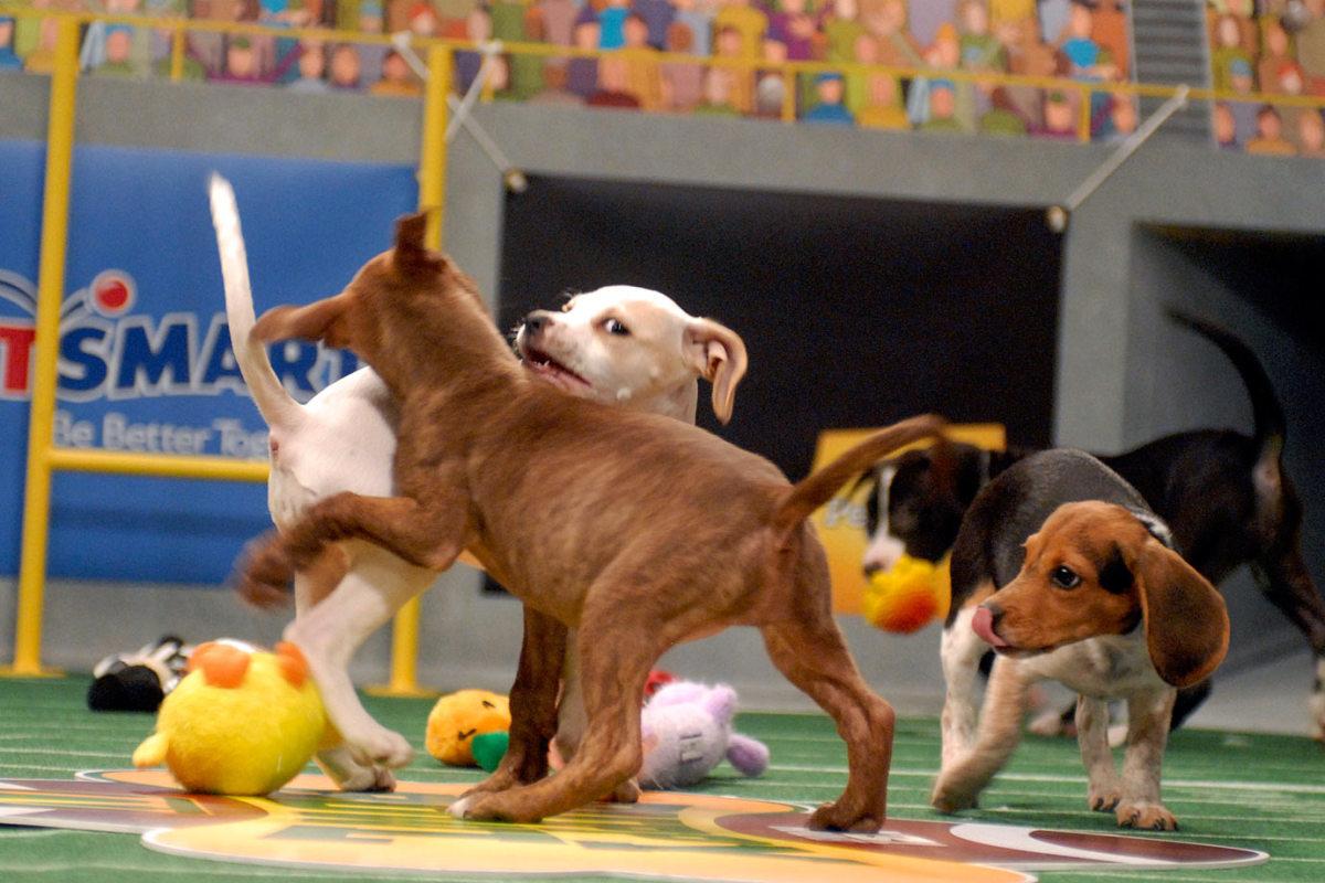 Puppy-Bowl-IV-AP071016028905_1.jpg