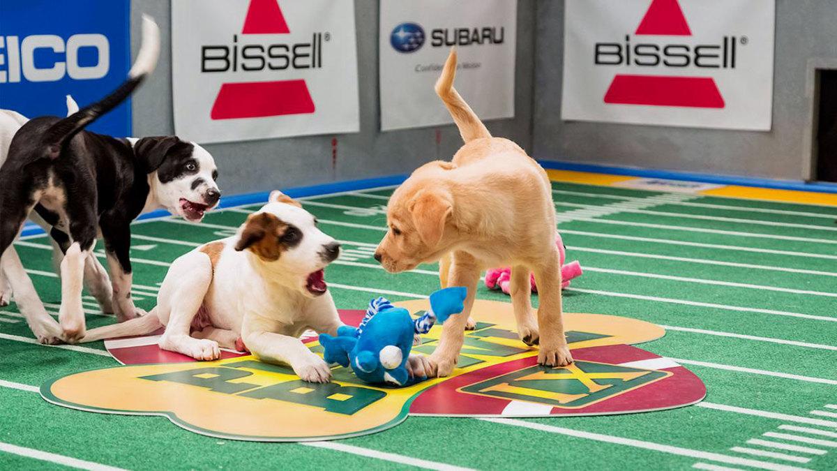 Puppy-Bowl-IX-(2).jpg