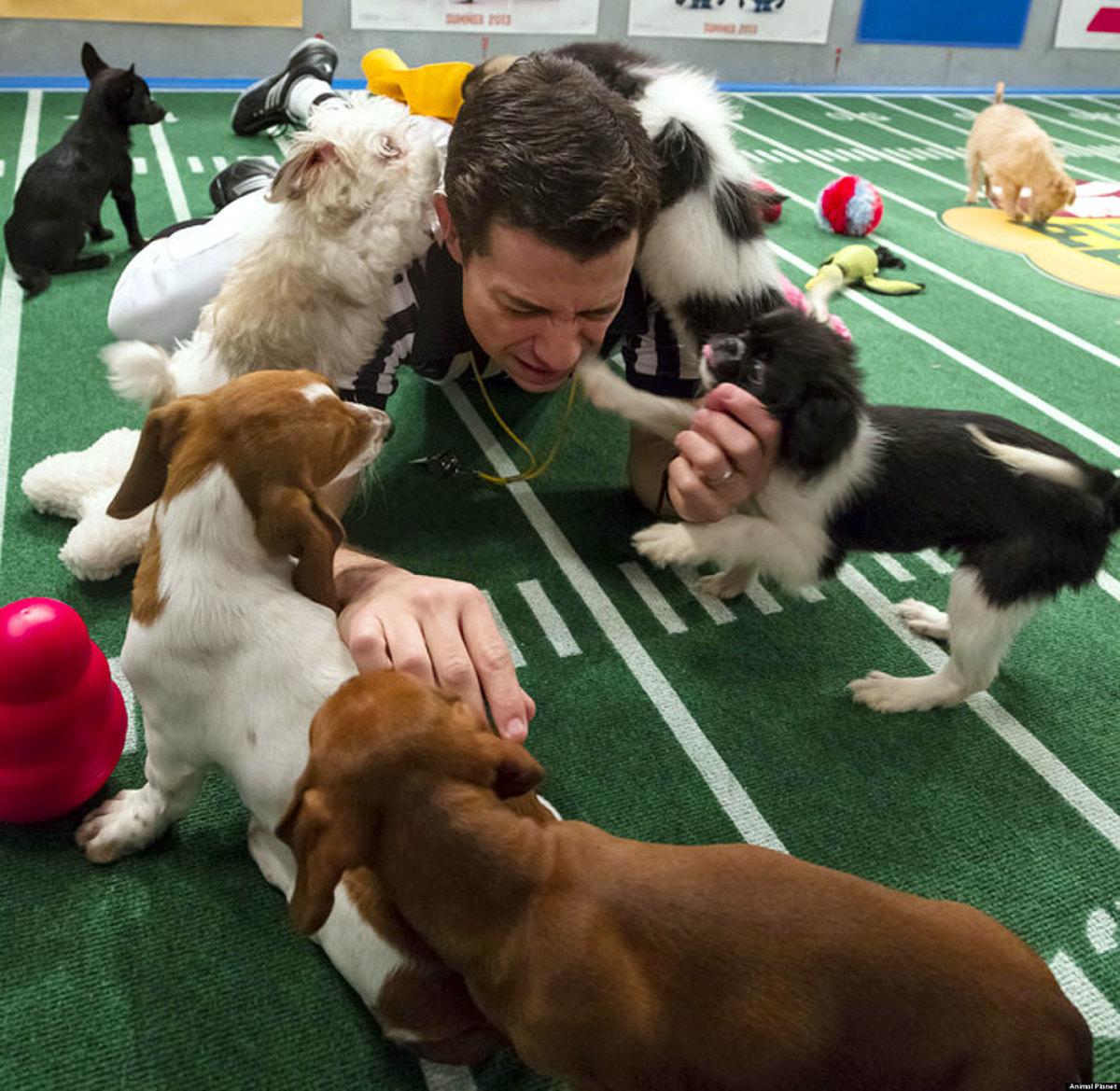 Puppy-Bowl-IX-referee.jpg