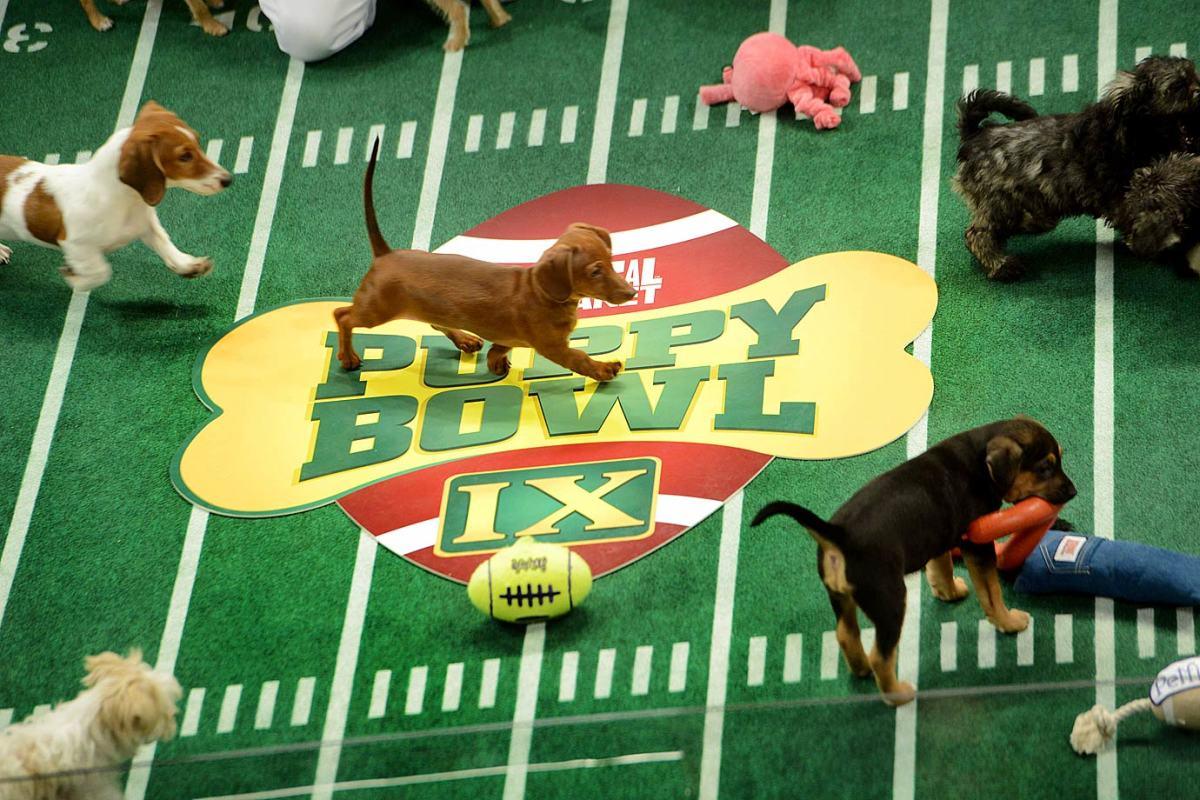 Puppy-Bowl-IX160313894.jpg