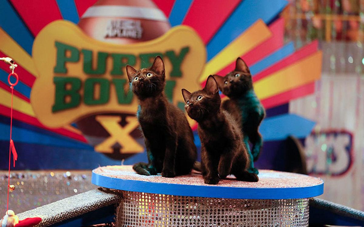 Puppy-Bowl-X-halftime-kittens.jpg