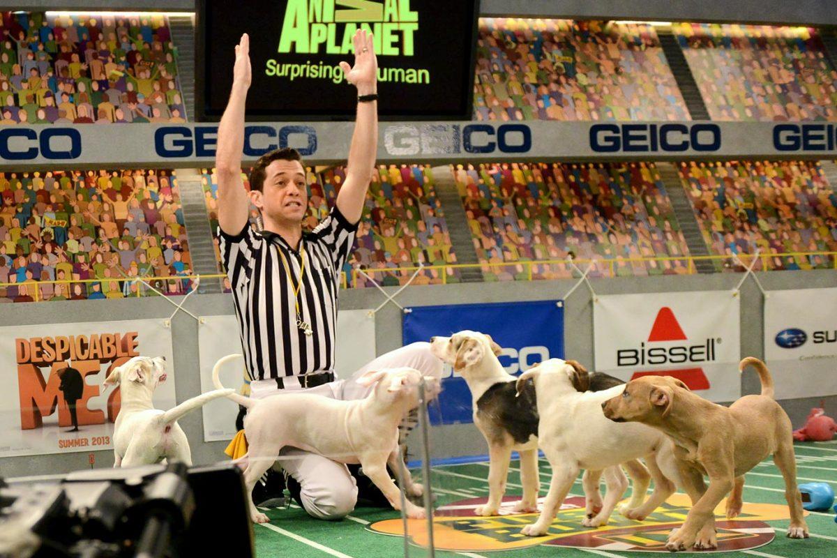Puppy-Bowl-IX-Dan-Schachner-160313888.jpg