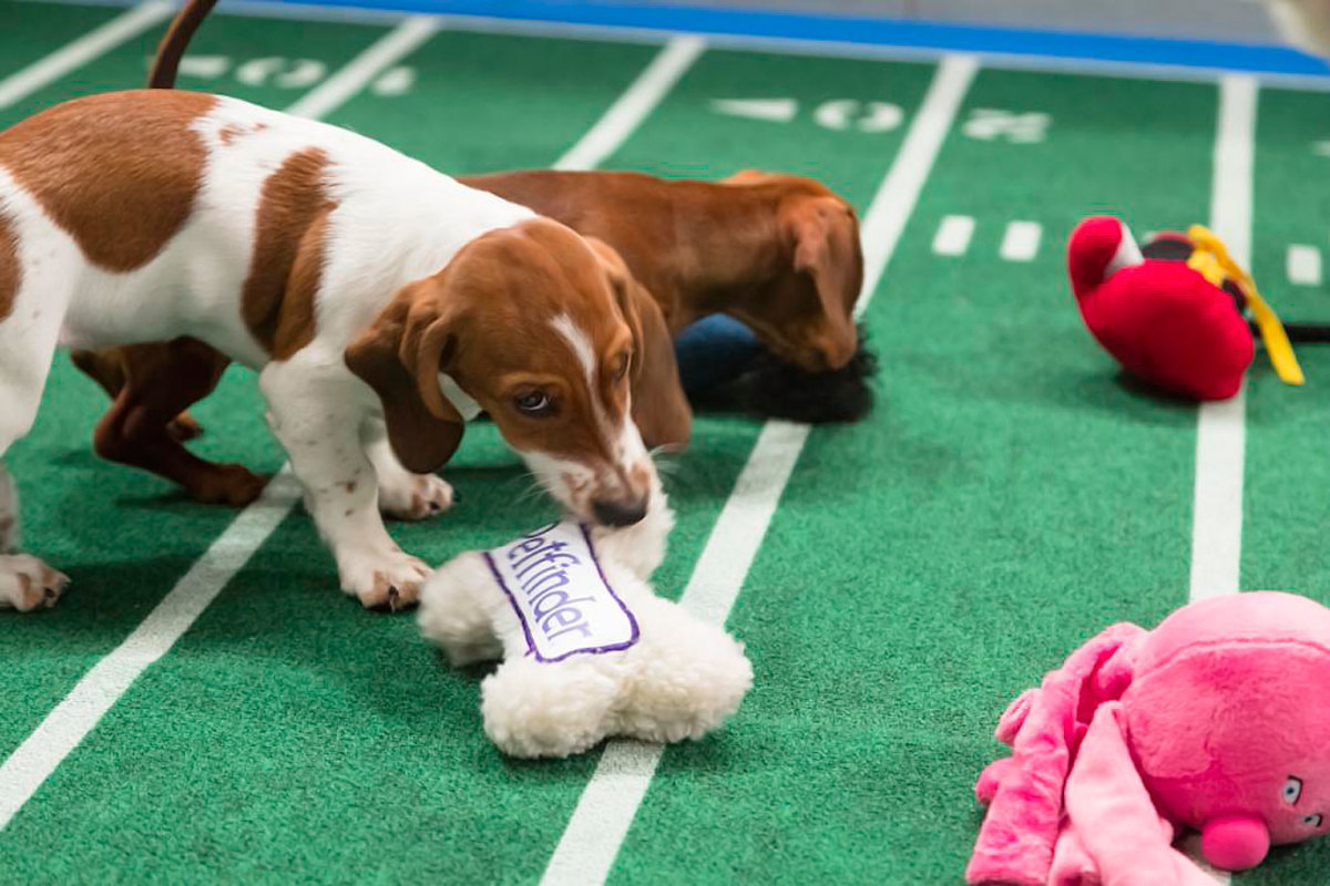 Puppy-Bowl-IX(3).jpg