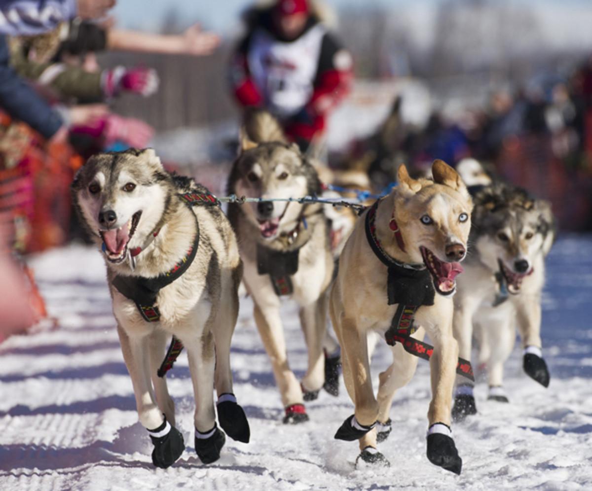 Zirkle's team runs across Willow Lake during the 2014 Iditarod.