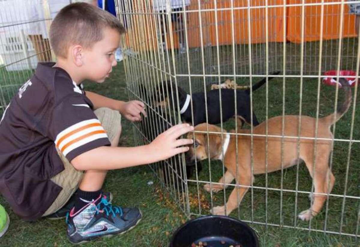 cleveland-browns-puppy-1.jpg