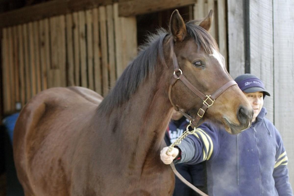 american-pharoah-sportshorse-2.jpg