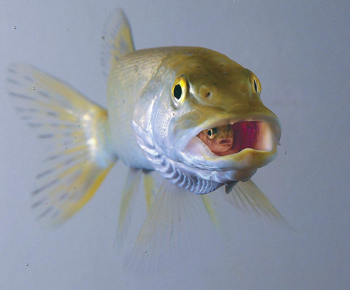 67-fish-fs.jpg