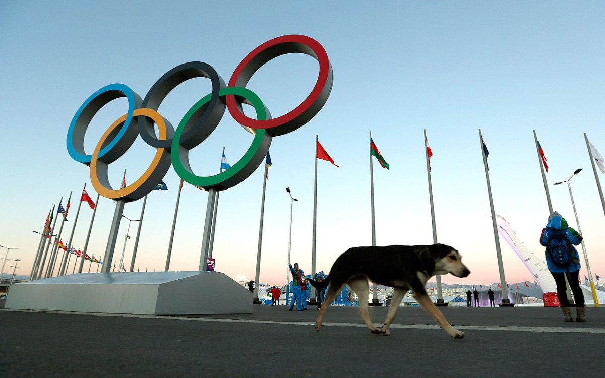 sochi-olympics-stray-dogs-483beaae61094be4bb3a436f54850039-0.jpg
