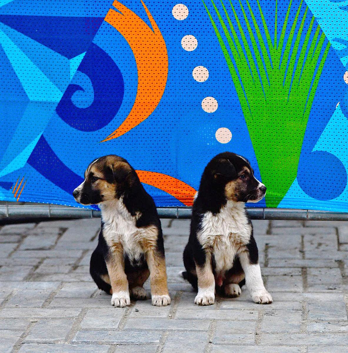 sochi-olympics-stray-dogs-opbc-1867.jpg