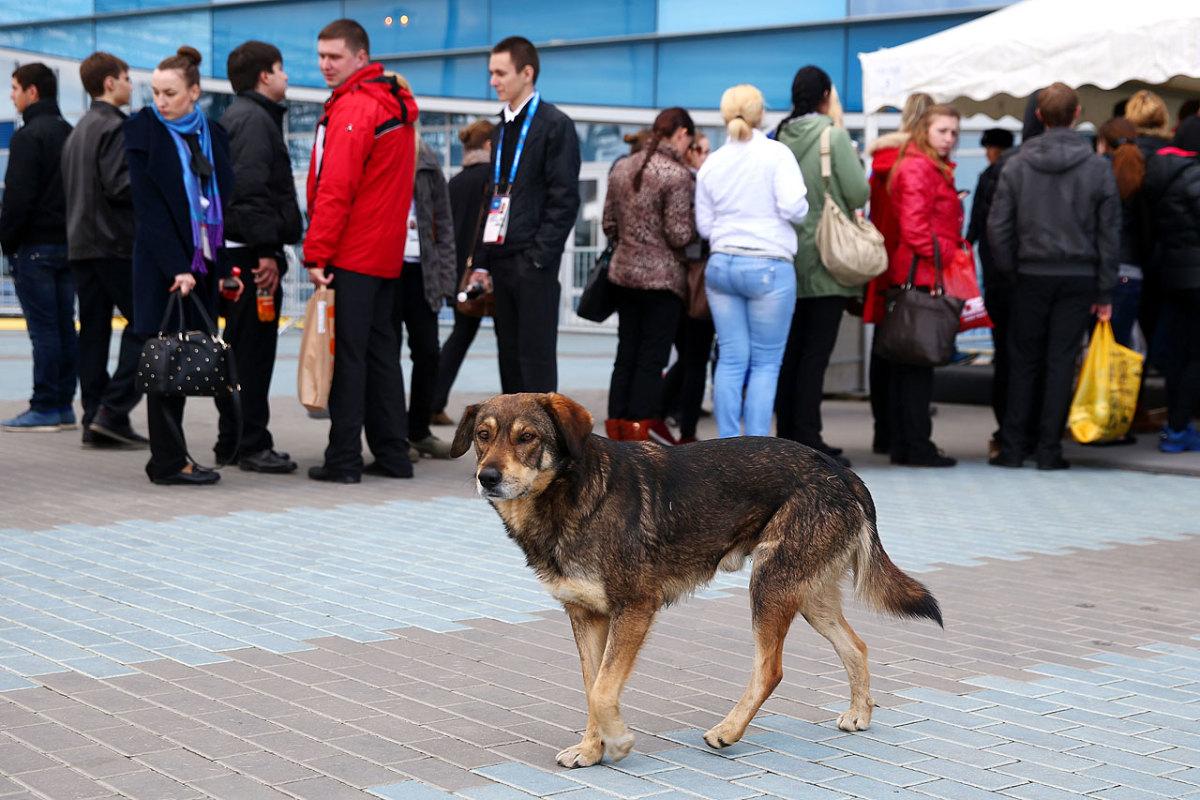 sochi-olympics-stray-dogs-466914885.jpg