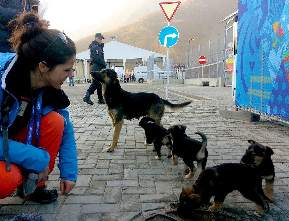 sochi-olympics-stray-dogs-469766615.jpg