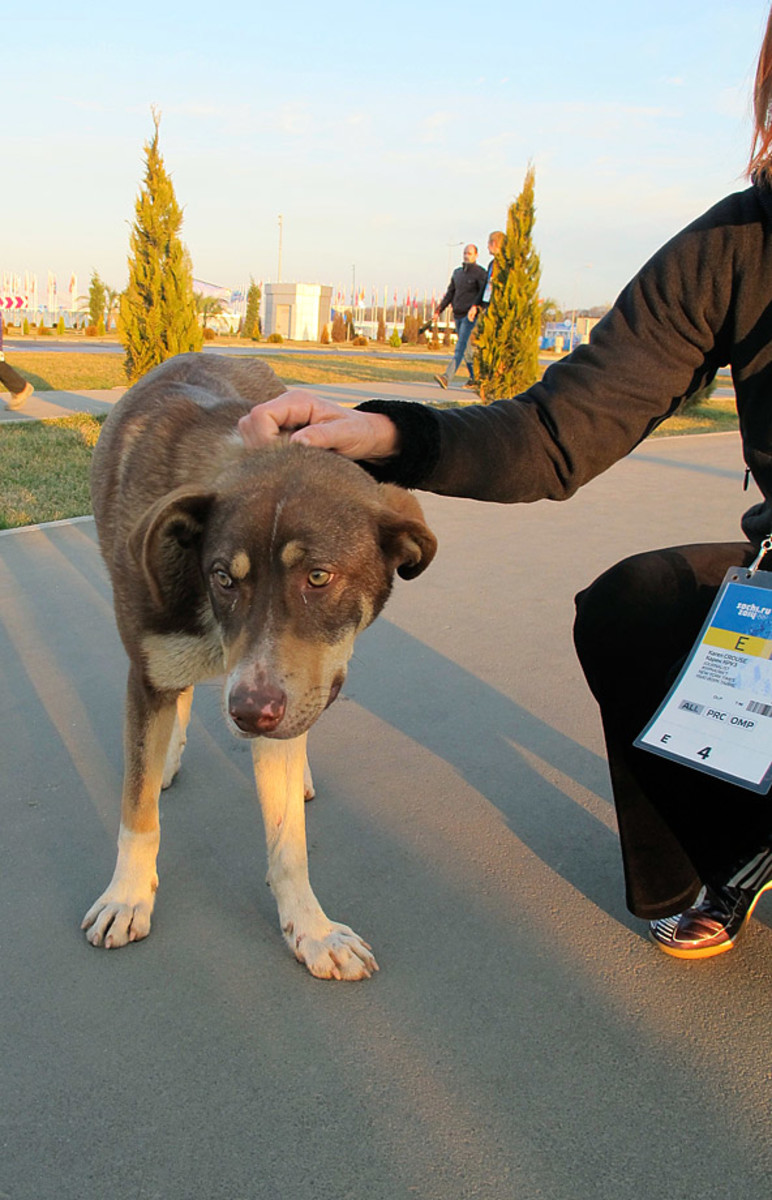 sochi-olympics-stray-dogs-craig-neff(4).jpg