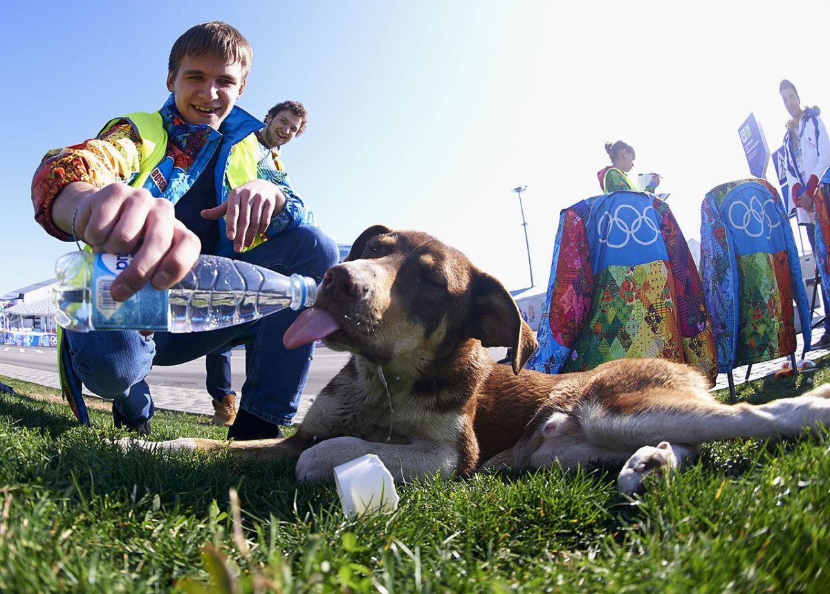 sochi-olympics-stray-dogs-opay-9616.jpg