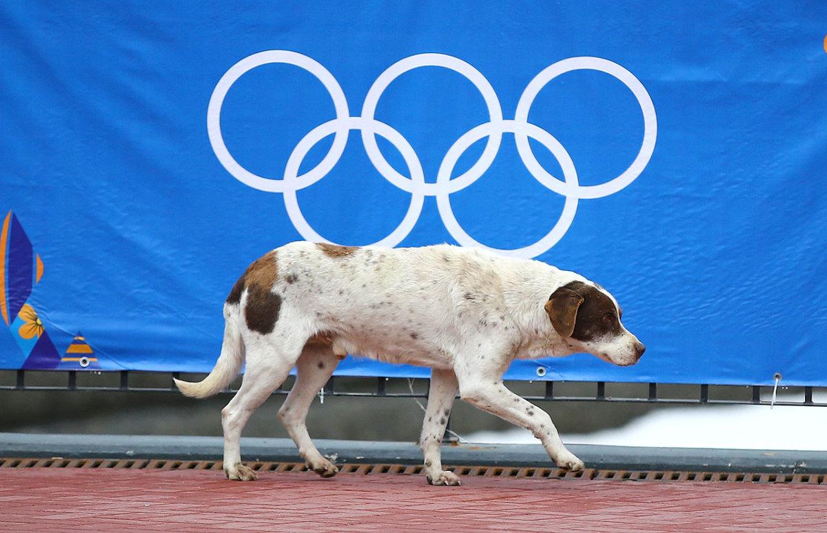 sochi-olympics-stray-dogs-466082691.jpg