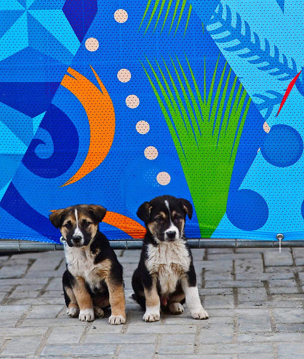 sochi-olympics-stray-dogs-opbc-1869.jpg