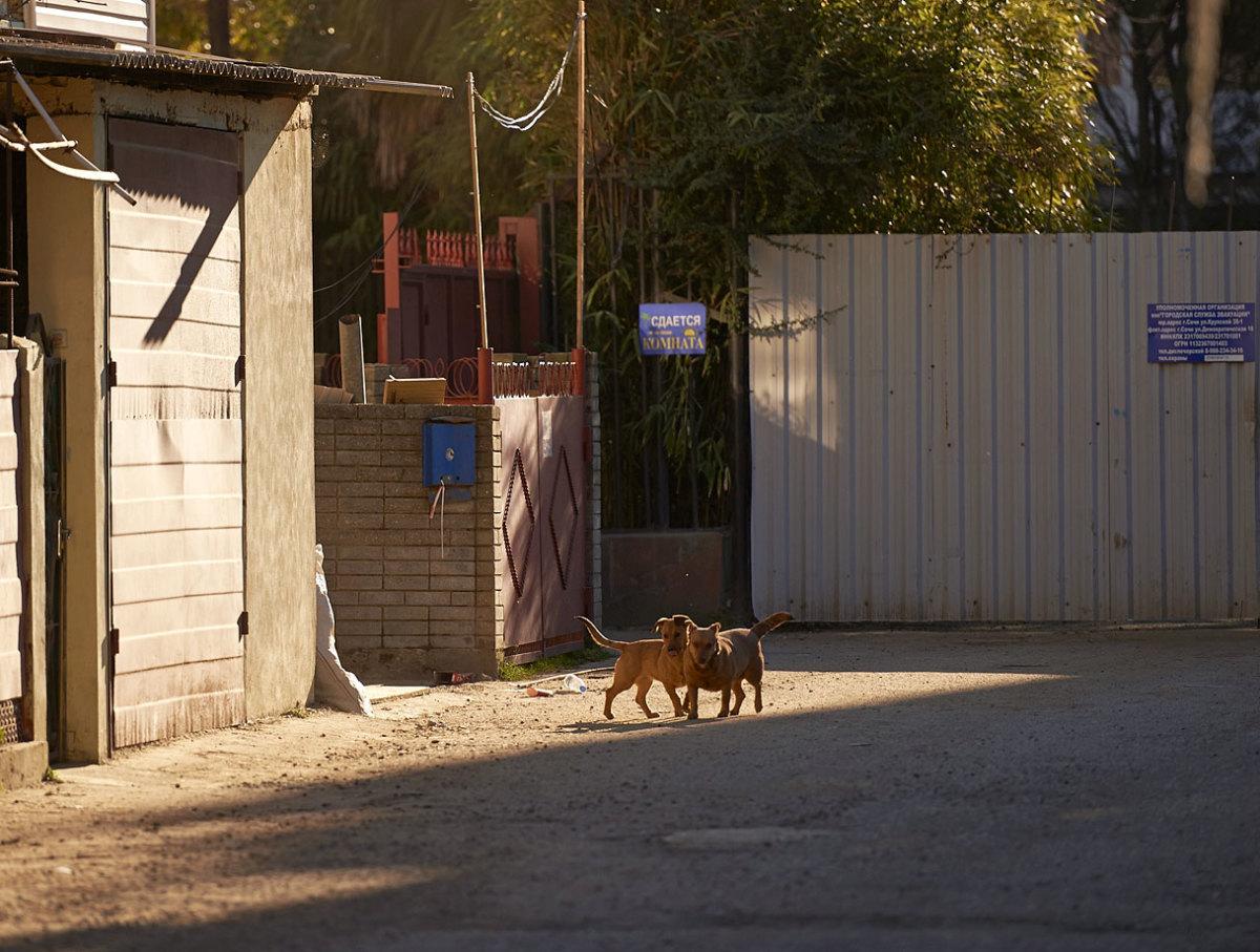 sochi-olympics-stray-dogs-opav-12025.jpg