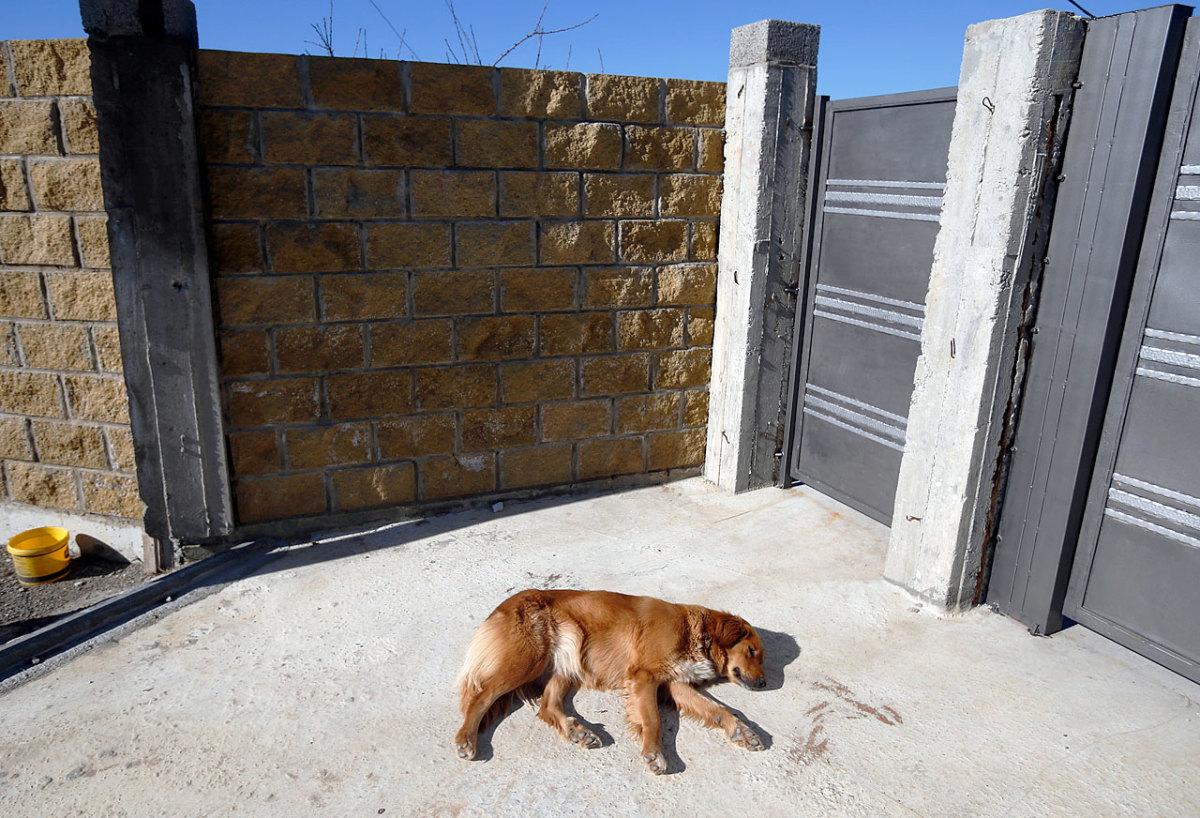 sochi-olympics-stray-dogs-919b6e51e3334548800804426affbc50-0.jpg