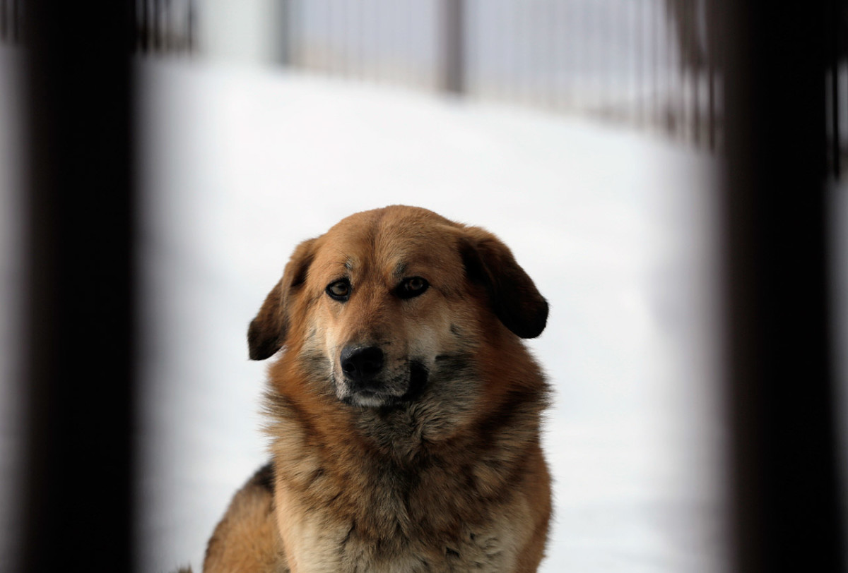 sochi-olympics-stray-dogs-collin-orcutt.jpg