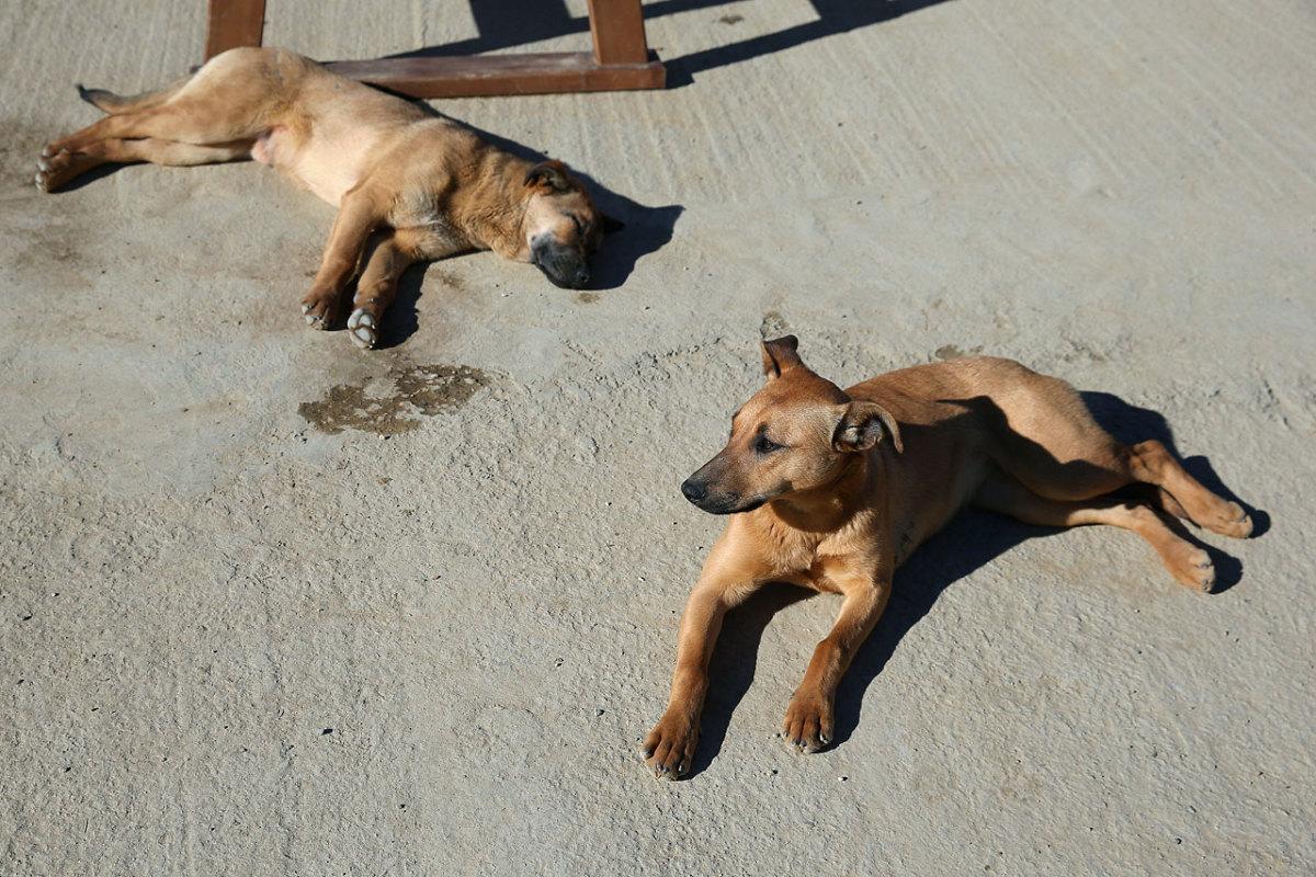 sochi-olympics-stray-dogs-466693981.jpg