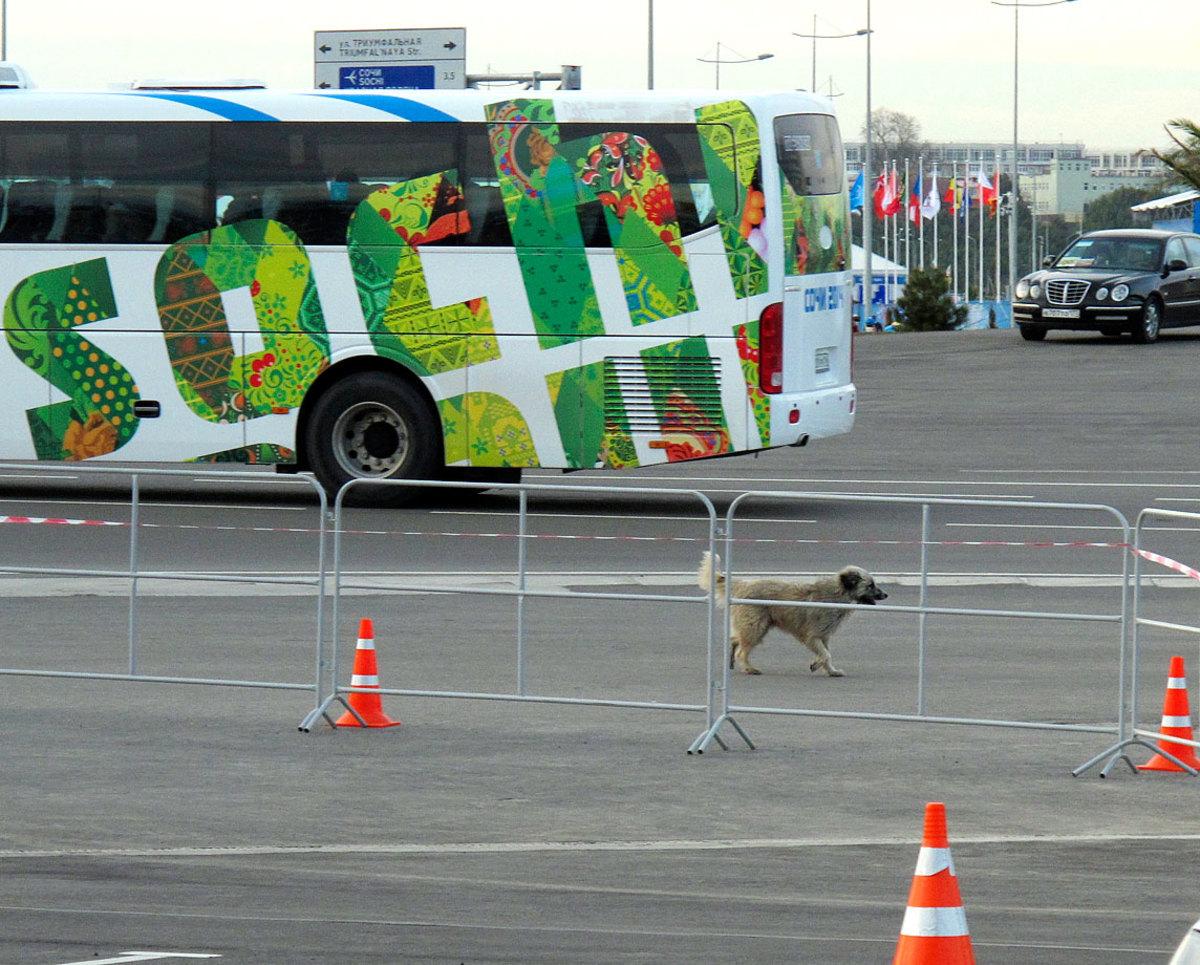 sochi-olympics-stray-dogs-craig-neff(6).jpg
