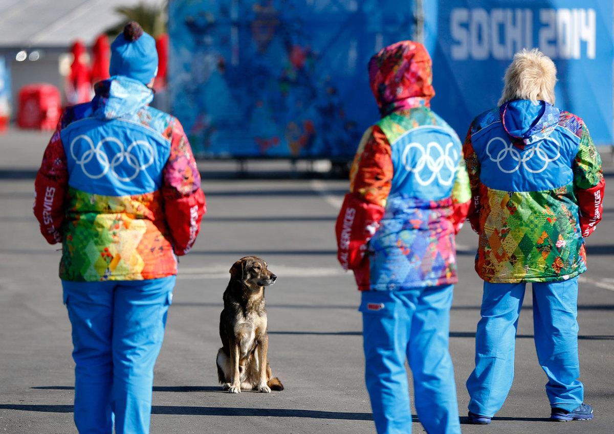 sochi-olympics-stray-dogs-ac1d84eabc5c4094bb871b68692e03fb-0.jpg