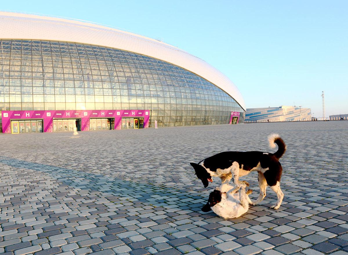 sochi-olympics-stray-dogs-466569679.jpg