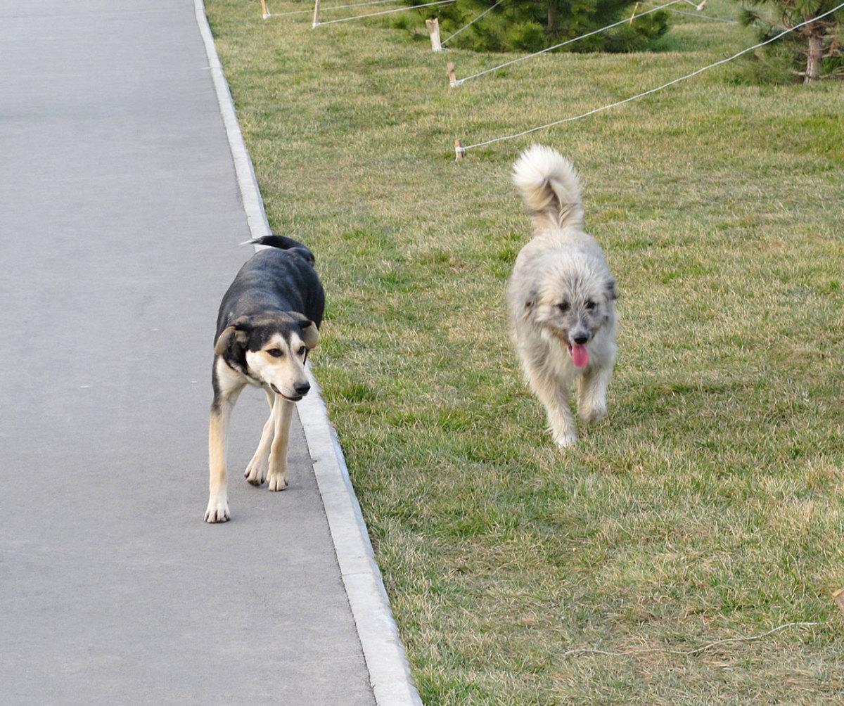 sochi-olympics-stray-dogs-craig-neff(3).jpg