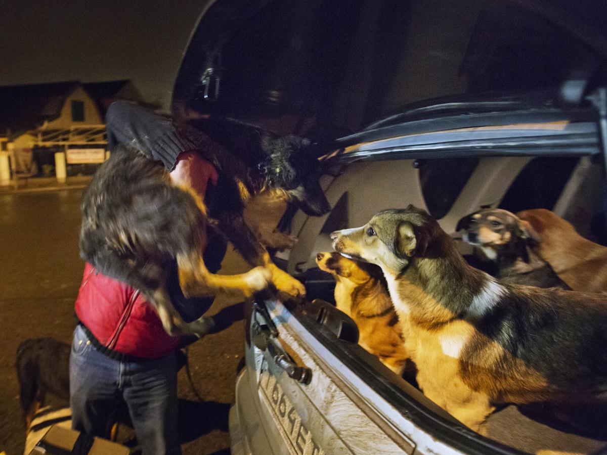 sochi-olympics-stray-dogs-0f2807f32b9846929a6e97354e62de7a-0.jpg