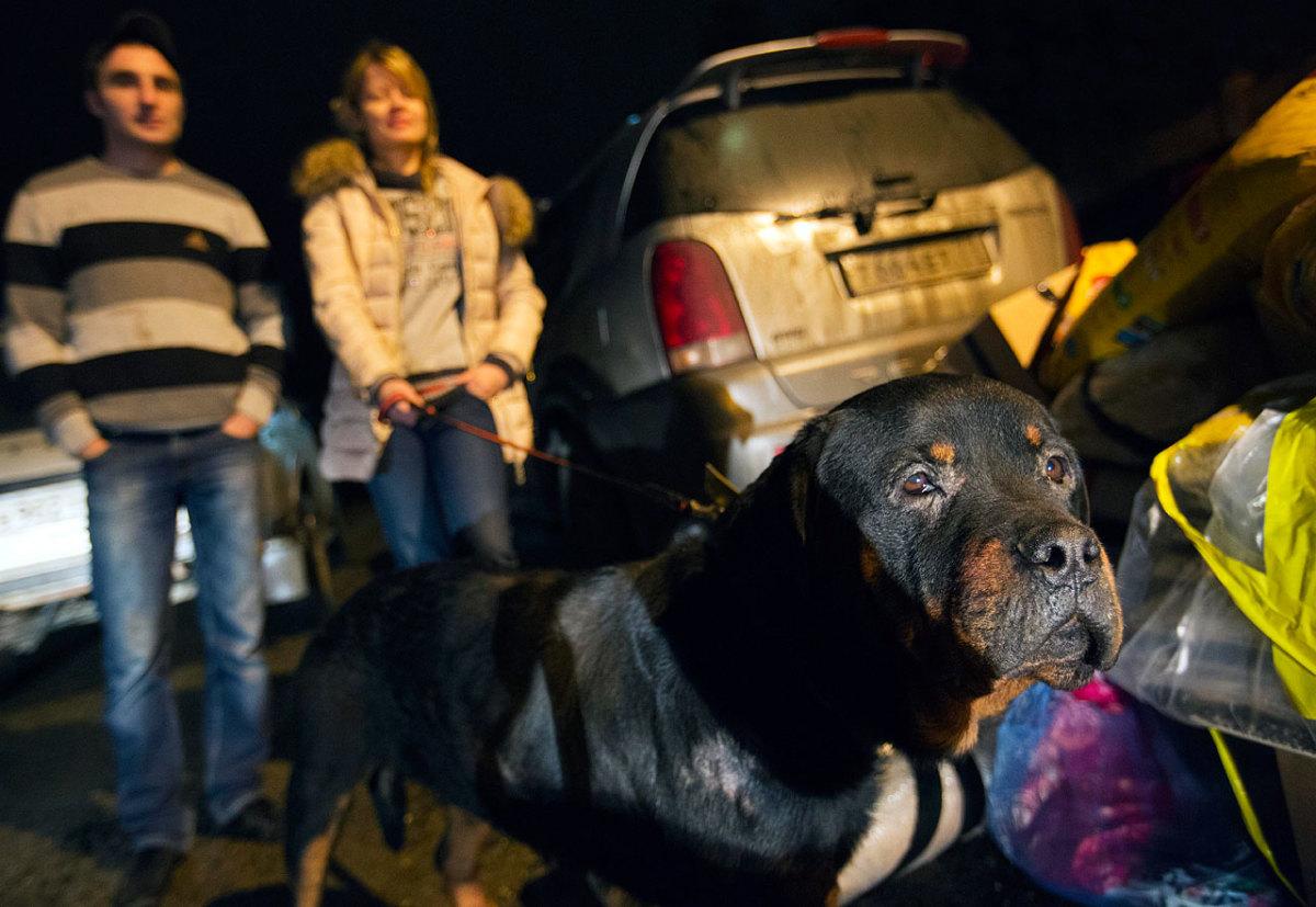 sochi-olympics-stray-dogs-AP983709889721_0.jpg