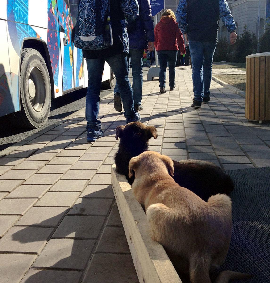 sochi-olympics-stray-dogs-austin-murphy.jpg
