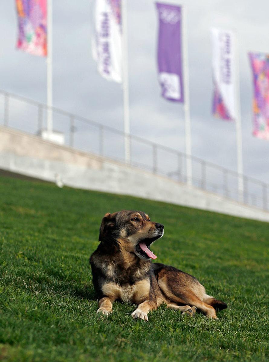 sochi-olympics-stray-dogs-5738bbfe3b2d4d40828ac8217ffe51c9-0.jpg