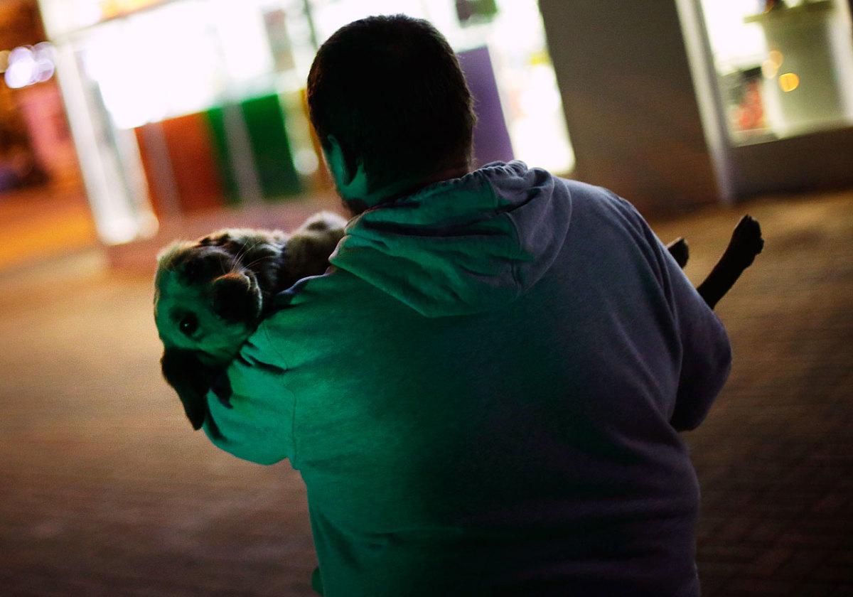 sochi-olympics-stray-dogs-5675cdfd107f423ebd5a588b5de36c25-0.jpg