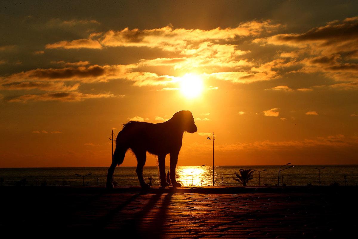 sochi-olympics-stray-dogs-466569785.jpg