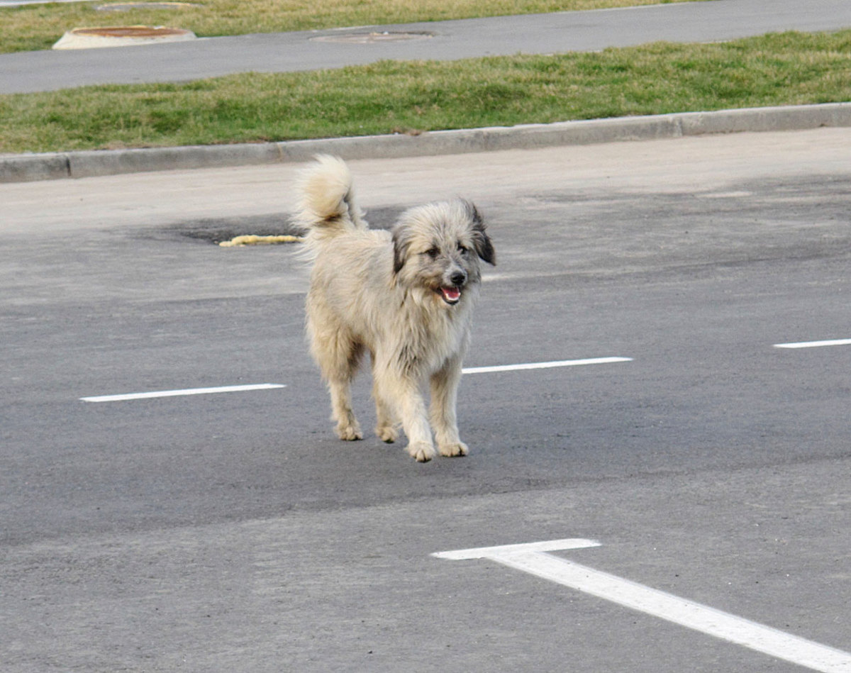 sochi-olympics-stray-dogs-craig-neff.jpg