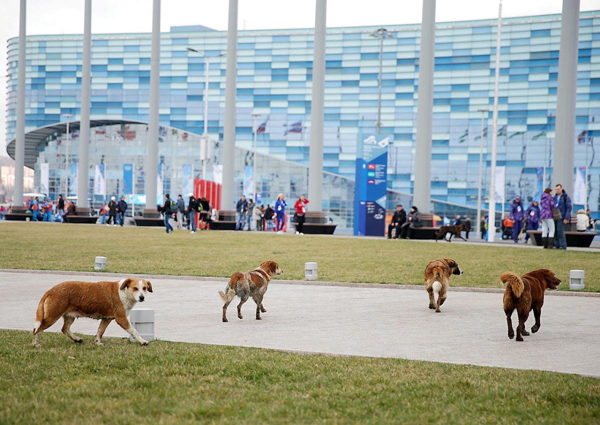 sochi-olympics-stray-dogs-468712219.jpg