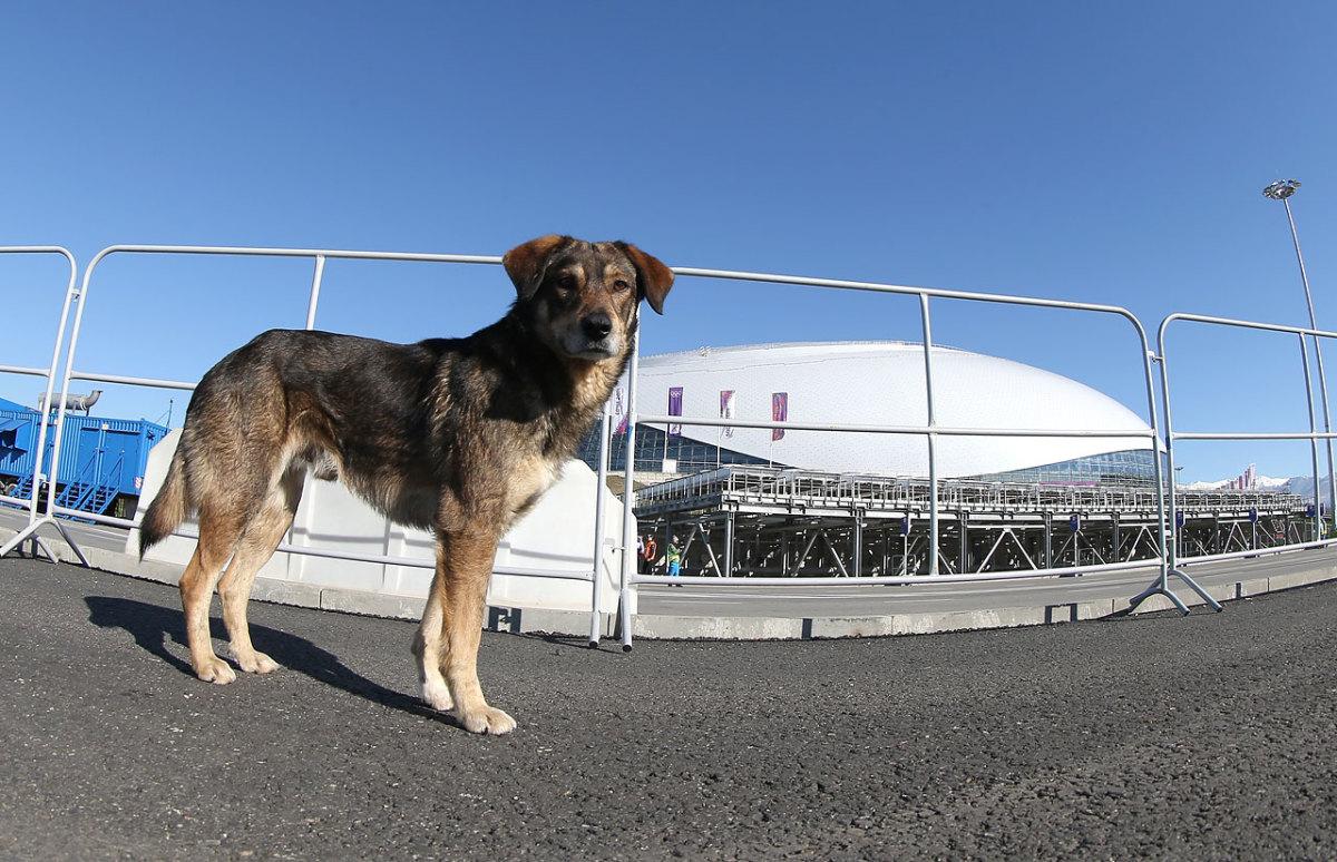sochi-olympics-stray-dogs-466694457.jpg