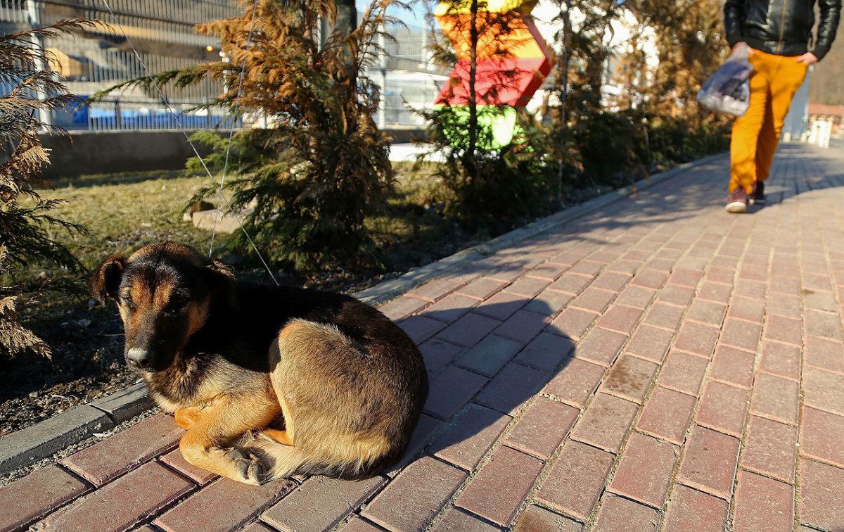 sochi-olympics-stray-dogs-466580489.jpg