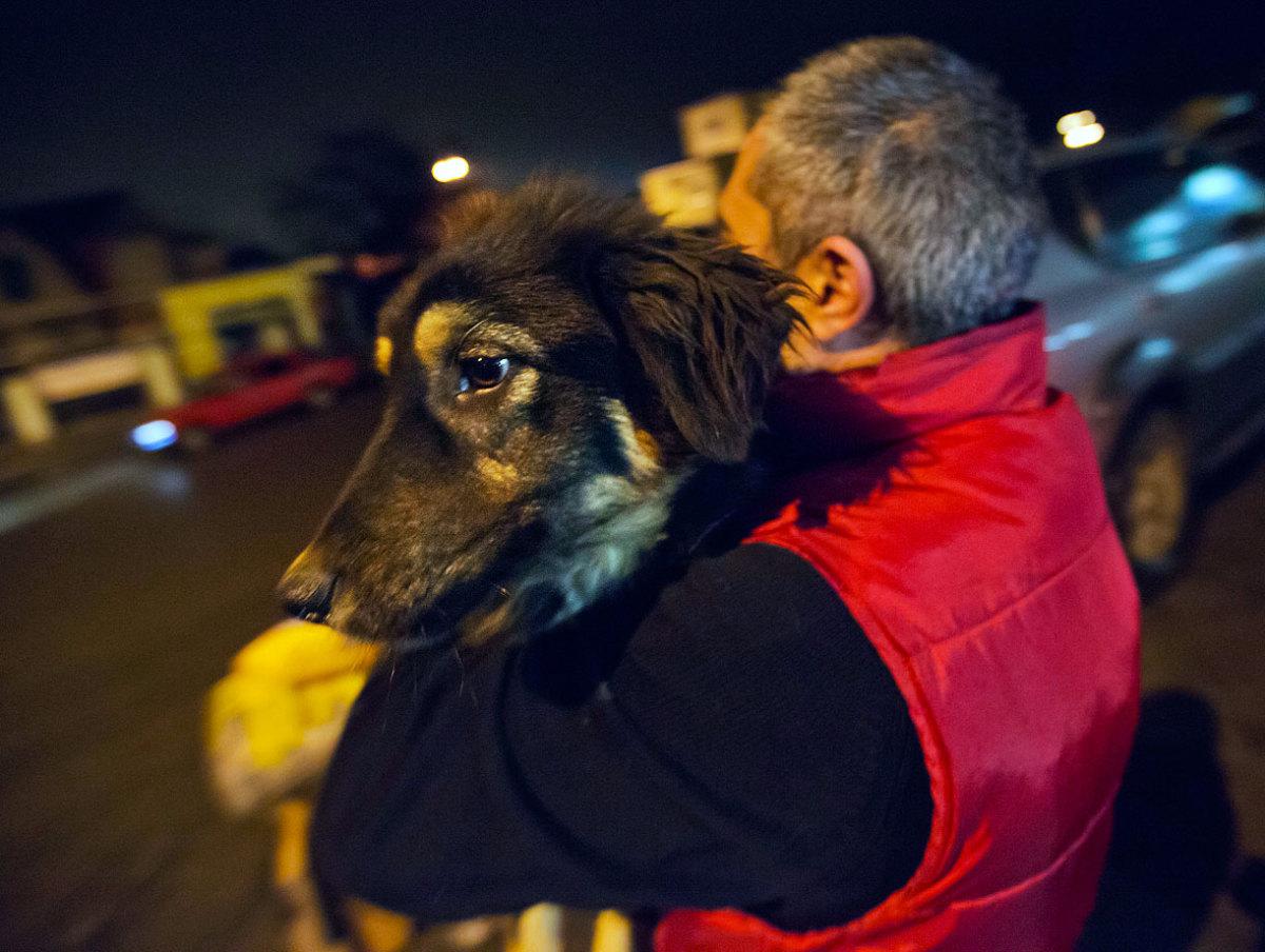 sochi-olympics-stray-dogs-AP646734220503_1.jpg