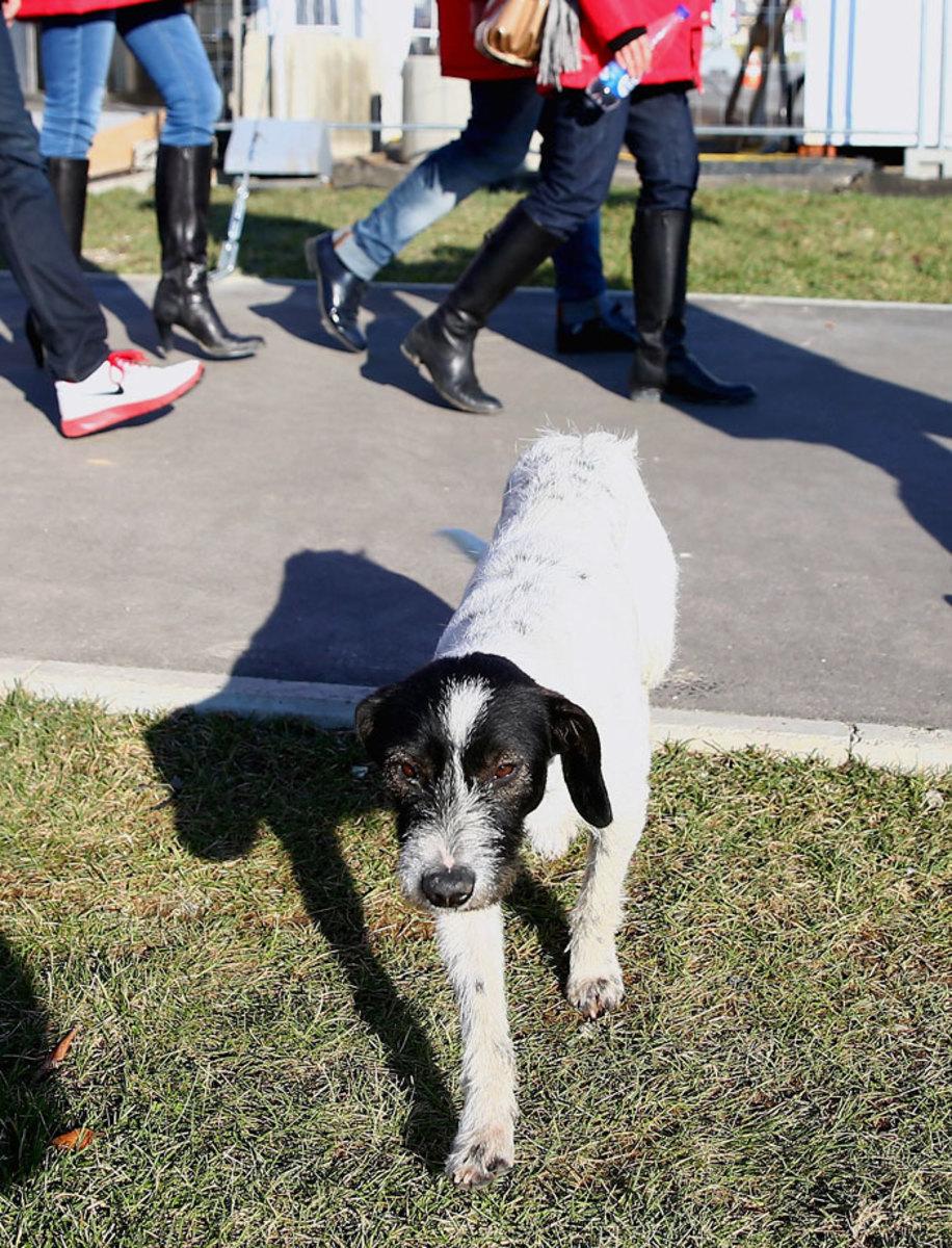 sochi-olympics-stray-dogs-466550295.jpg