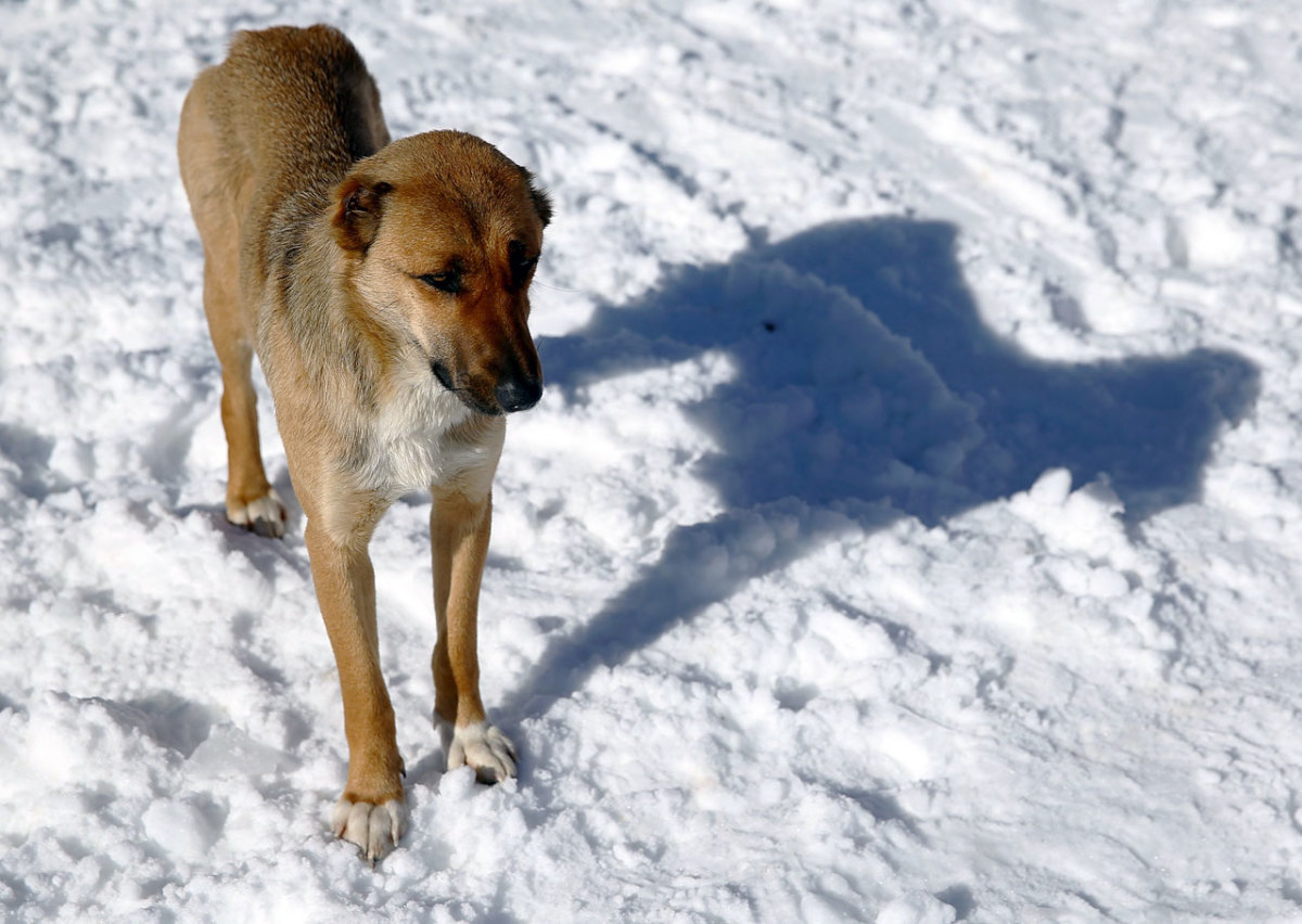 sochi-olympics-stray-dogs-466808989.jpg