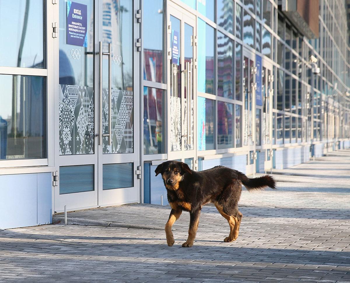 sochi-olympics-stray-dogs-466550283.jpg