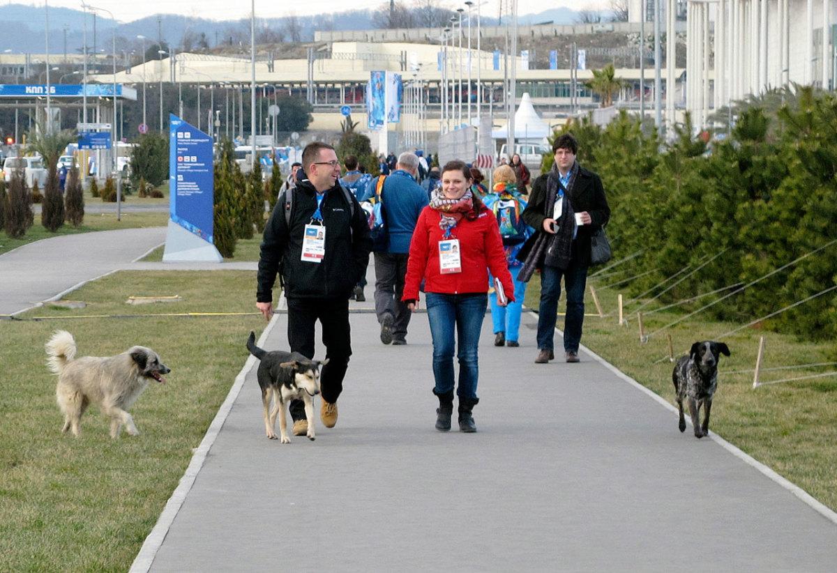 sochi-olympics-stray-dogs-craig-neff(2).jpg