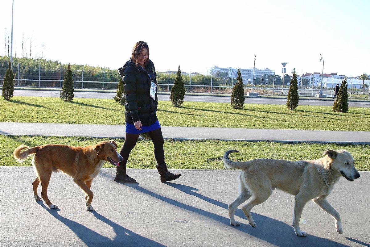 sochi-olympics-stray-dogs-466550273.jpg