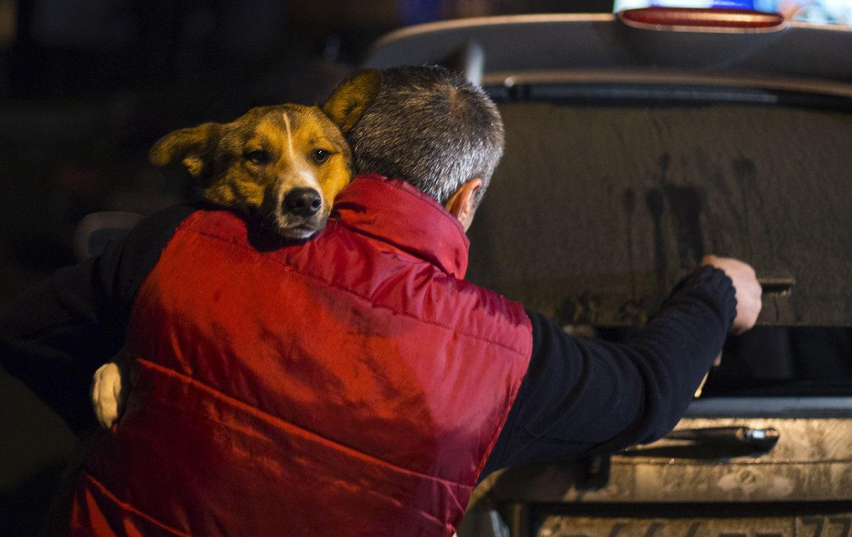 sochi-olympics-stray-dogs-45bce0a8a12f43e9b16f5838605fd8ef-0.jpg