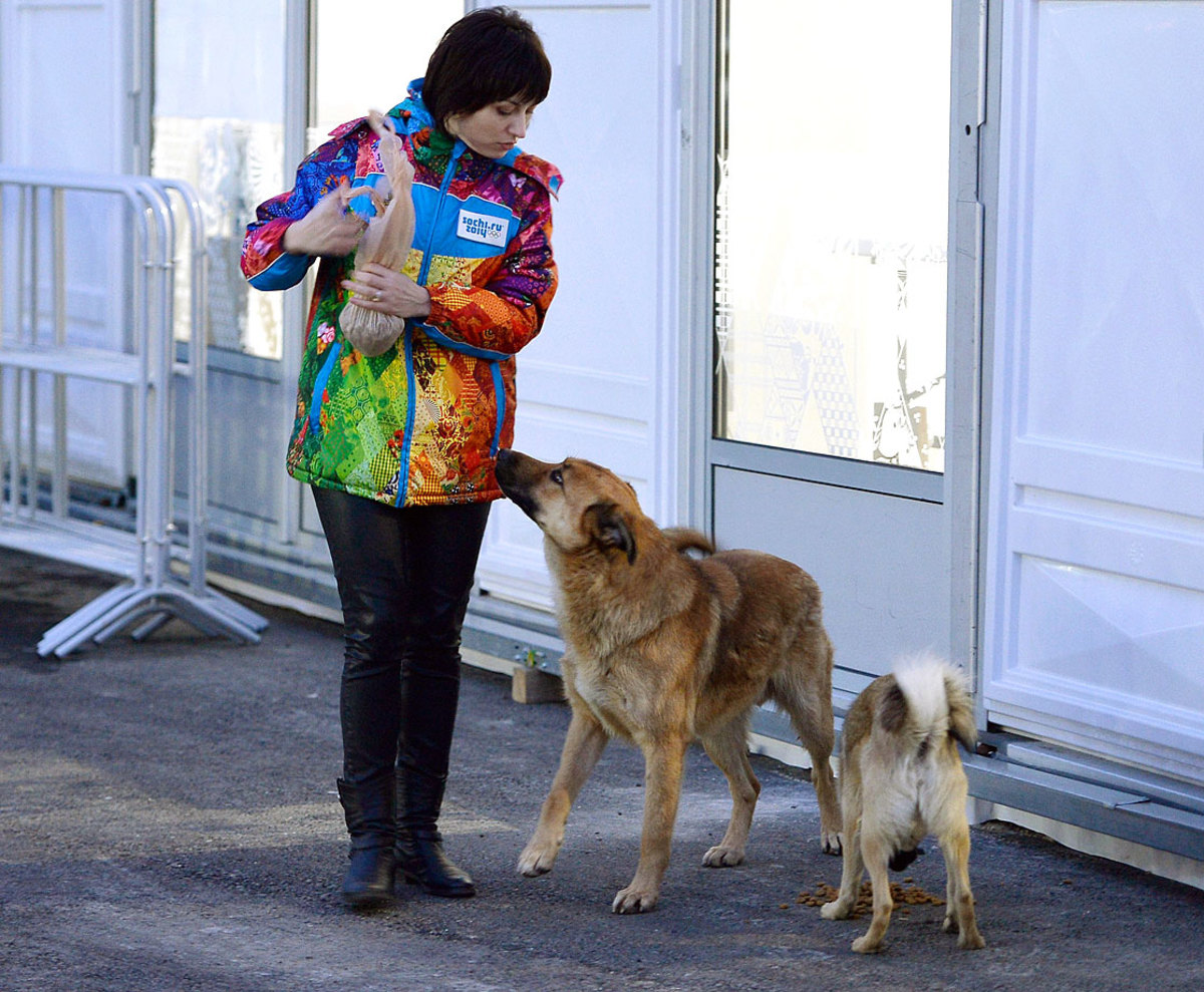 sochi-olympics-stray-dogs-466895519.jpg