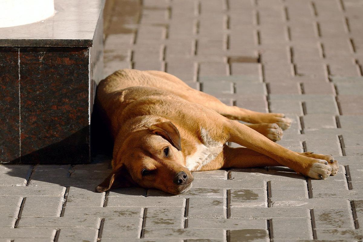 sochi-olympics-stray-dogs-466569819.jpg