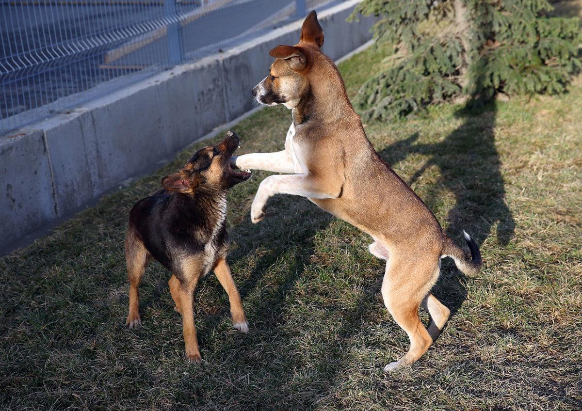sochi-olympics-stray-dogs-469460025.jpg