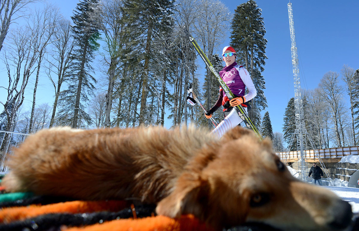 sochi-olympics-stray-dogs-466910223.jpg